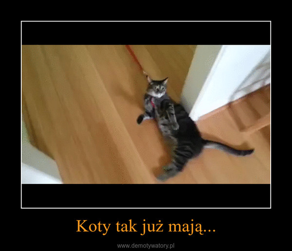 Koty tak już mają... –