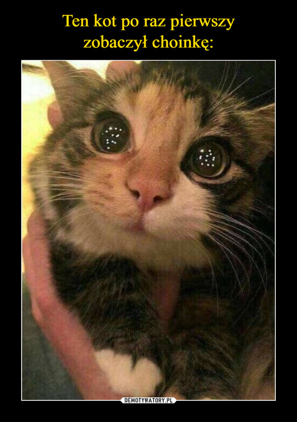 Ten Kot Po Raz Pierwszy Zobaczył Choinkę Demotywatorypl