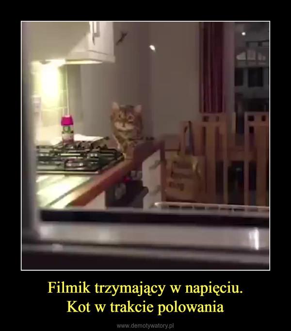 Filmik trzymający w napięciu.Kot w trakcie polowania –